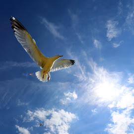 by Alain Labbe Alain - Animals Birds