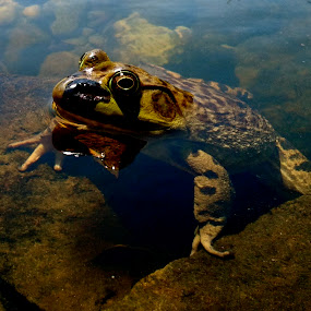 by Ryan Bunting - Instagram & Mobile Android ( water, bull frog, floating, pond, large )