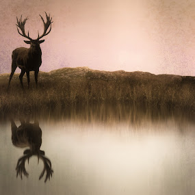 The Stag at Dusk by Jennifer Woodward - Digital Art Animals ( wild, animals, wildlife, stag, mammal, deer )