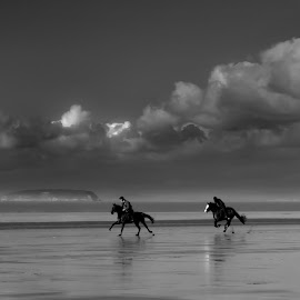 by Dave Hayward - Landscapes Beaches ( horse's, sand, tide, beach, storm, race )