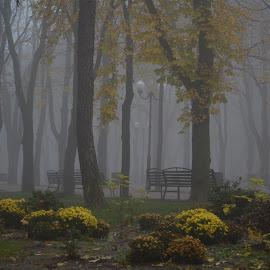 Dimineață de noiembrie by Carmen-Laura B - City,  Street & Park  City Parks ( foggy, bench, park, autumn, trees, flowers )
