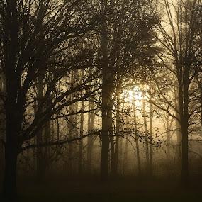 Fog, sun and trees 2 by Thomas Fitzrandolph - Landscapes Sunsets & Sunrises ( nature, fog, niagara county ny, trees, nikon d5200, sunrise, sun, lockport ny )