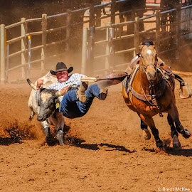 by Brent McKee - Sports & Fitness Rodeo/Bull Riding ( qld, cowboy, steer wrestling, horse, steer, rodeo )