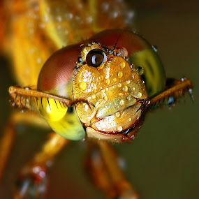 Washing my Face by Alit  Apriyana - Animals Insects & Spiders