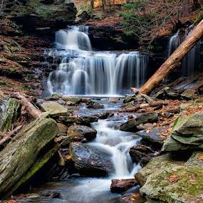 Kitchens Creek by Buddy Eleazer - Landscapes Forests ( ricketts glenn, pa )