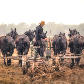 Seven Horsepower by Robert Fawcett - Animals Horses ( farm, amish, horses, pennsylvania, places, travel, lancaster, fields )