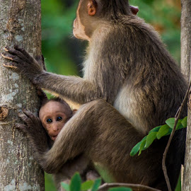Under Mother's Care by Naveen Joyous - Animals Other ( mother, nature, wildlife, baby, monkey )