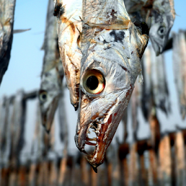 Dried fish..... by Gautam Tarafder - Animals Fish
