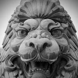 Lion by Lori O'Neil - Buildings & Architecture Statues & Monuments ( lion, statue, decay )