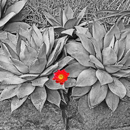 Spot On by Reuss Griffiths - Abstract Patterns ( red, texture, cactus, red flower, grey )
