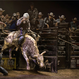 Hold on Cowboy  by Dries Fourie - Sports & Fitness Rodeo/Bull Riding