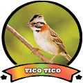 App tico tico canto do cemiterio apk for kindle fire