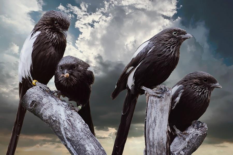 by Judy Rosanno - Animals Birds ( san antonio zoo, november 2017,  )