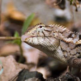 by Vishwas Watwe - Animals Reptiles