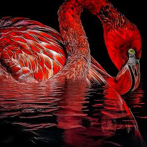 Ron Meyers - Flamingo DA-1.jpg