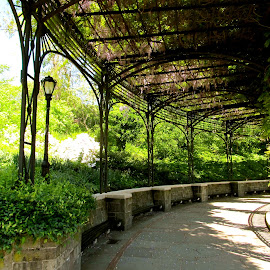 Walkway Through Central Park, NYC by Kathleen Koehlmoos - City,  Street & Park  City Parks ( nyc, arboretum, central park, pretty pathways, wedding sites in central park,  )