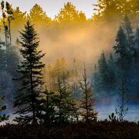 Bog Fog Lights Up by Christopher Burnett - Landscapes Forests ( fog, shafts of light, sunrise, bog, pwcsunbeams )