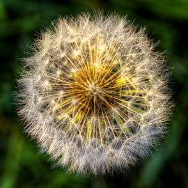 by Boris Frković - Nature Up Close Other plants