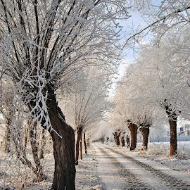 temporary beauty by Ghislain Vancampenhoudt - Landscapes Prairies, Meadows & Fields