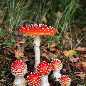 Kindergarten by Irena Gedgaudiene - Nature Up Close Mushrooms & Fungi