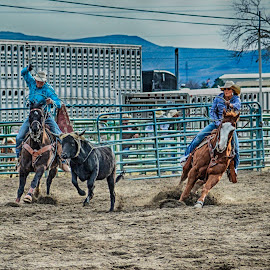 Team Roping! by Jim Shafer - Sports & Fitness Rodeo/Bull Riding ( team roping, jim berryman-shafer, roping, the west, jim shafer, rodeo, team, western images )