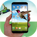 Hummingbird fly in phone prank APK for Kindle Fire