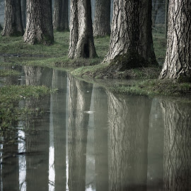 Puddle by Andy Hedges - Landscapes Waterscapes ( water, trees, reflections, puddle, landscape )