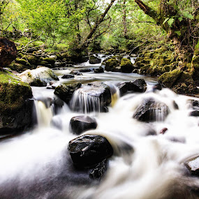 Aira Beck by Josh Hilton - Landscapes Forests ( countryside, england, flowing water, creek, summer, beck, landscape, rocks, english, united kingdom, lake district )