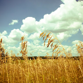 Sway by Brittany Humphrey - Landscapes Prairies, Meadows & Fields ( bike, grass, forest preserve, trail, prairie, walk, hike )