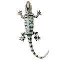 Game Lizard apk for kindle fire