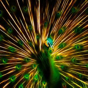 shiny peacock by Yan Abimanyu - Digital Art Things