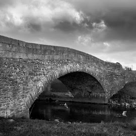 by Stephen Crawford - Buildings & Architecture Bridges & Suspended Structures ( sky, black+white, ducks, architecture, bridges,  )