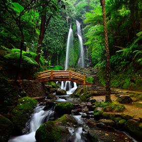Karanganyar by Hendri Suhandi - Landscapes Forests ( waterfall, java, forest, travel, karanganyar )