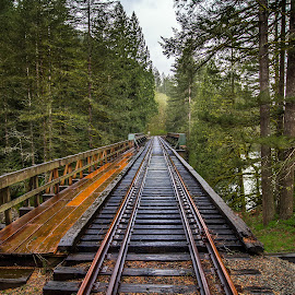 Train Trestle by John Matzick - Buildings & Architecture Bridges & Suspended Structures ( nobody, old, wood, railroad, direction, trestle, way, northwest, road, transportation, travel, landscape, rustic, transit, iron, lane, nature, metal, transport, path, rail, train, support, park, vintage, speed, grass, lush, green, track, pacific, sturdy, forest, wooden, railway, route, outdoor, lumber, summer, bridge )