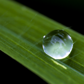 The pearl of Mother Nature by Vishwas Watwe - Nature Up Close Natural Waterdrops (  )