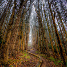 Snaking Logs by Andrew Gilbert - Nature Up Close Trees & Bushes ( presidio, hdr, fog, trees, san francisco )