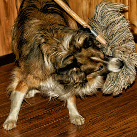 Mop Attack! by Twin Wranglers Baker - Animals - Dogs Playing (  )