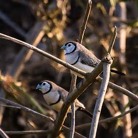 Twinnies  by Sarah Sullivan - Novices Only Wildlife