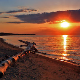 Beached Log by Mike Grosso - Landscapes Sunsets & Sunrises ( water, driftwood, port austin, sunsets, lake huron, port crescent state park, reflections, port crescent beach )