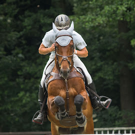 The viking by Klaus Müller - Sports & Fitness Other Sports ( animals, nature, horses, sports, show jumping )