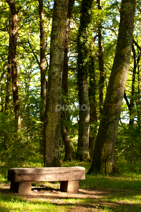Wood Bench In the Forest by eZeepics Studio - City,  Street & Park  City Parks ( vertical, wood, bench, relax, landscape, tree, nature, seat, light, park, grass, green, beautiful, forest, scenic, portrait, wooden, season, outdoor, peace, pwcbenches, scene, summer, brown, rest, scenery )