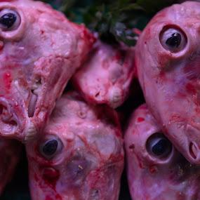 Eyes by VAM Photography - Animals Other Mammals ( market, culture, animals, travel, eyes, sheep )