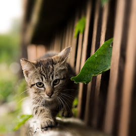 Cat on walk by Globephoto CZ - Animals - Cats Portraits ( farm, playing, cats, pets, portrait, animal )
