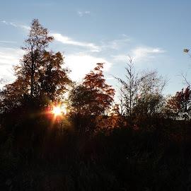 by Margarita Rose - Landscapes Sunsets & Sunrises (  )