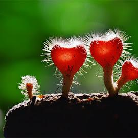 love in light by Sandi Nopri yanto - Nature Up Close Mushrooms & Fungi ( wild, macro, nature, fungus, light )
