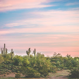 Arizona Sunset by Alex Rosenkranz - Landscapes Deserts (  )