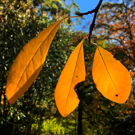 Yellow Leaves by Geoffrey Wols - Instagram & Mobile iPhone ( fall, leaves, autumn, colourful,  )
