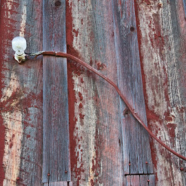 Old gray barn will with red lichen and naked light bulb. by Gale Perry - Abstract Patterns ( power cord, grey barn, naked light bulb, red lichen, wall,  )