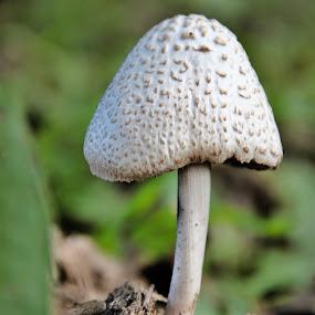 Garden fungi by Clarissa Human - Nature Up Close Mushrooms & Fungi (  )