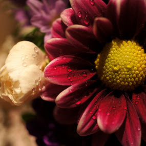 Fresh by Fatemeh Azadbakht - Nature Up Close Flowers - 2011-2013 ( canada, fresh, h&s-graphic, drops, photo-fatima )